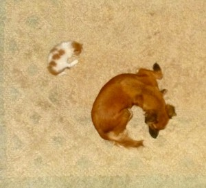 The cat and the dog .....